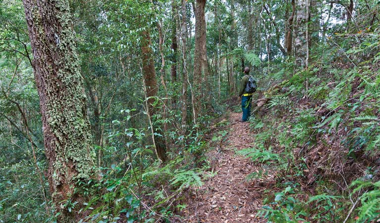Blackbutt walking track - Accommodation Gold Coast