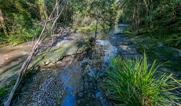 Dawson River walking track - Accommodation Gold Coast