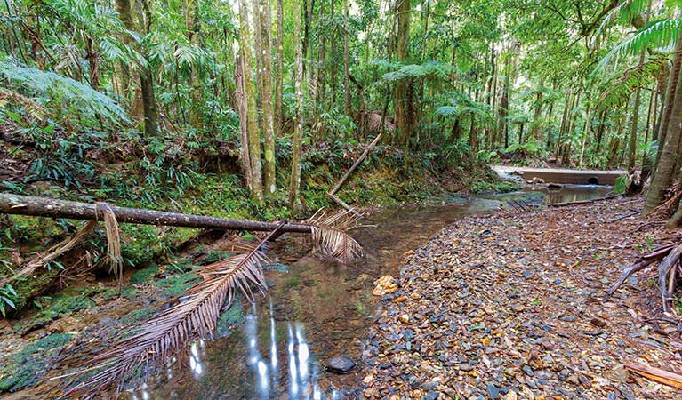 Ulidarra National Park - Accommodation Gold Coast
