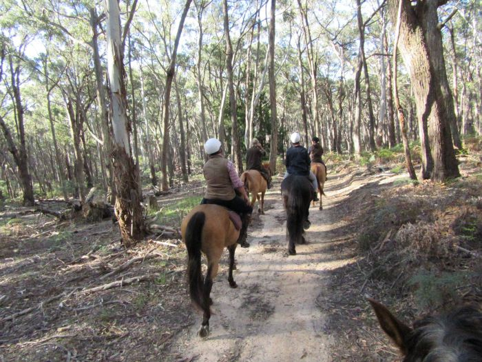 Silver Brumby Trails - Accommodation Gold Coast