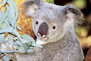 Perth Zoo General Entry Ticket and Sightseeing Cruise - Accommodation Gold Coast