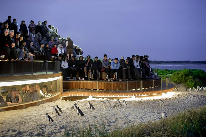 1 Day Private Phillip Island Tour VIP Charter up to 9 People - Accommodation Gold Coast