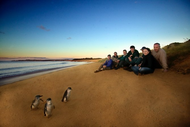 Phillip Island Ultimate Penguin Eco Tour or Skybox Experience - Accommodation Gold Coast