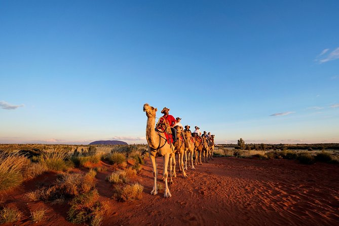 Uluru Camel Express Sunrise or Sunset Tours - Accommodation Gold Coast