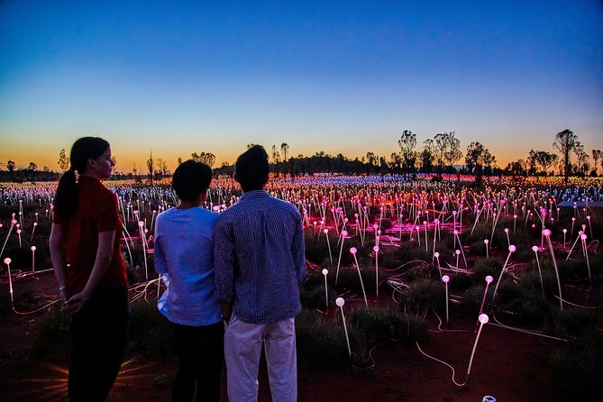 Uluru Field of Light Sunrise Tour - Accommodation Gold Coast