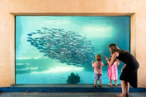 AQWA the Aquarium of Western Australia - Accommodation Gold Coast