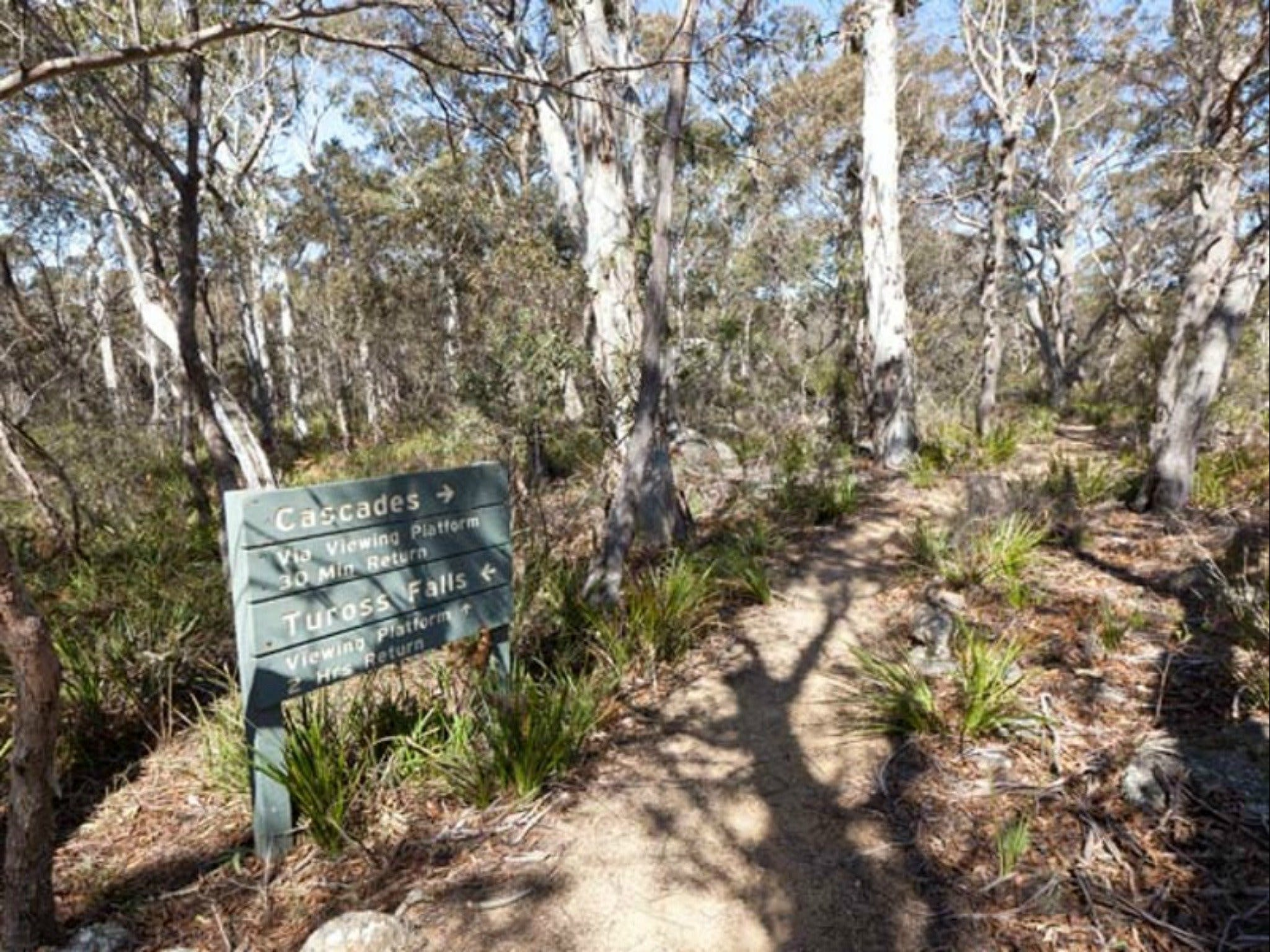 Cascades walking track and viewing platform - Accommodation Gold Coast