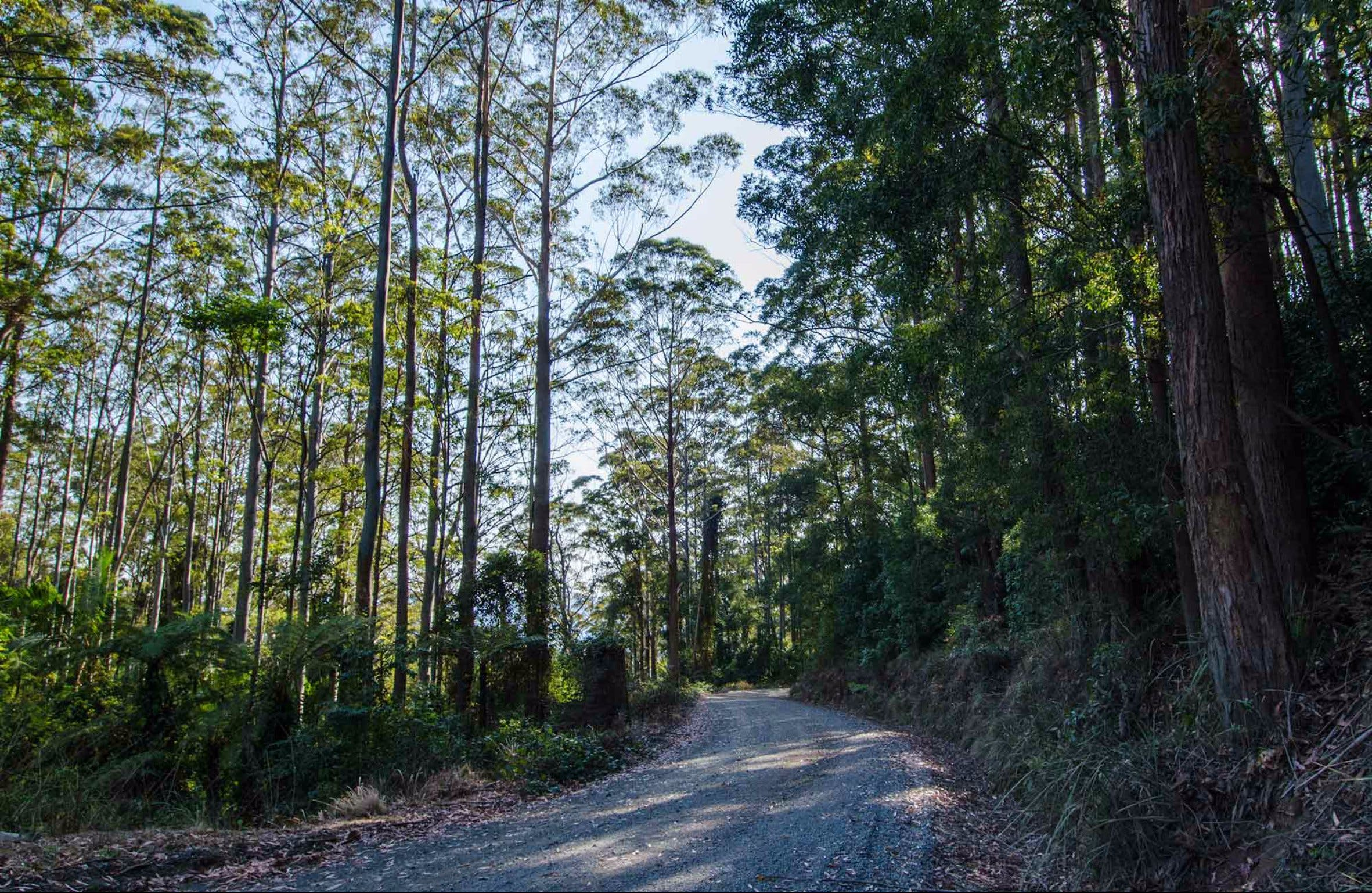 Hastings Forest Way Touring Route - Accommodation Gold Coast
