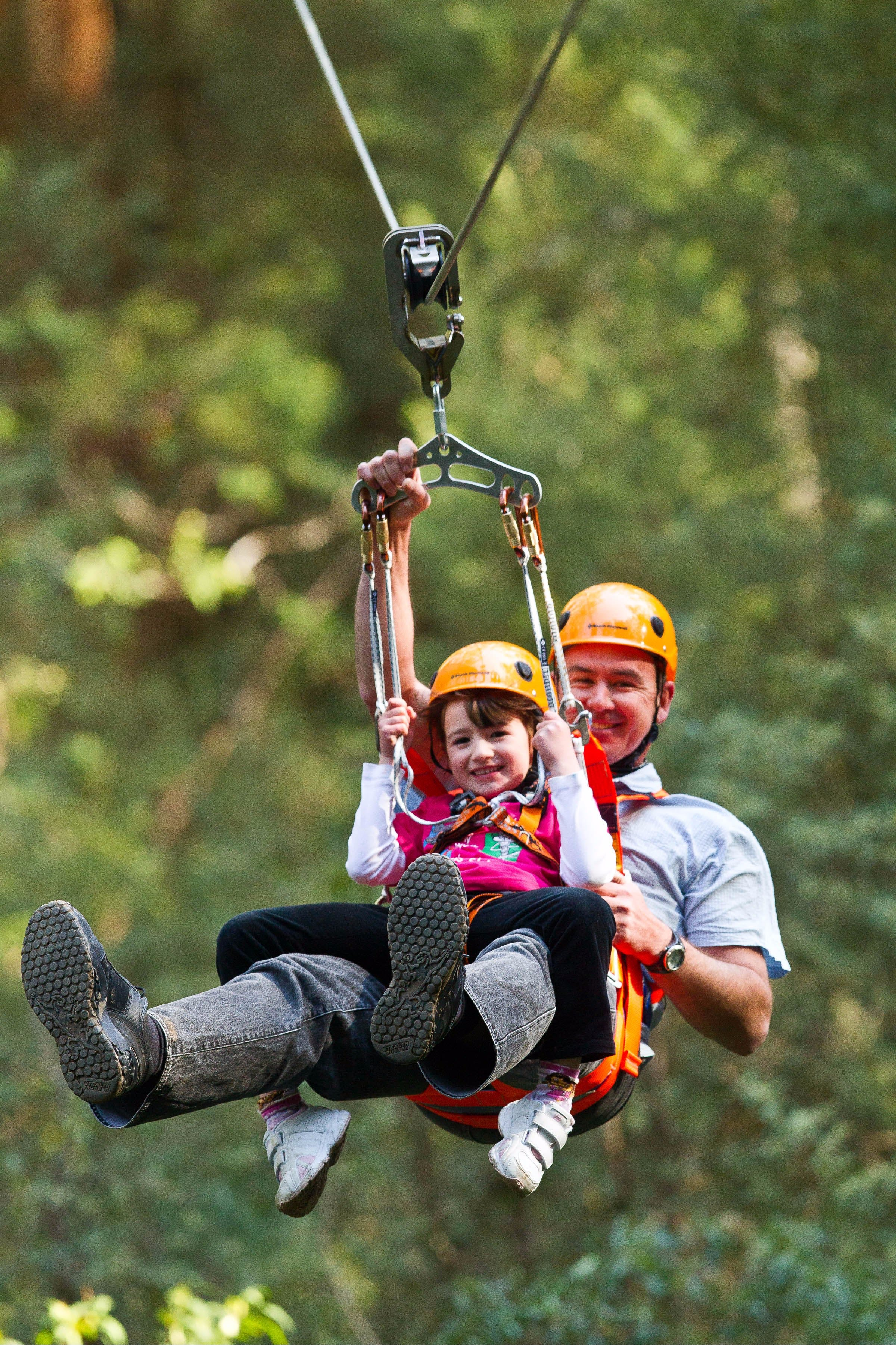 Zipline at Illawarra Fly - Accommodation Gold Coast