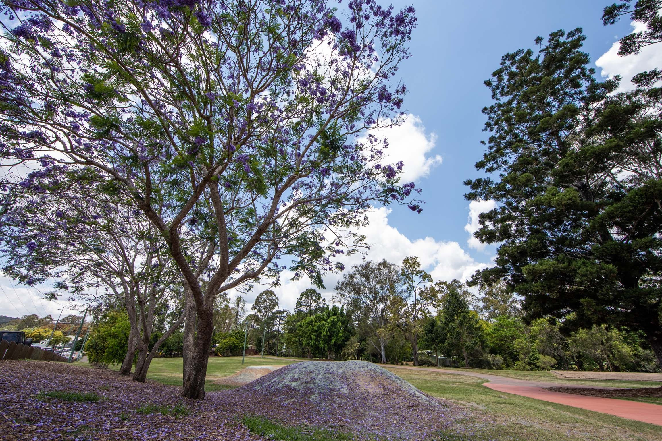 John Scott Park - Accommodation Gold Coast