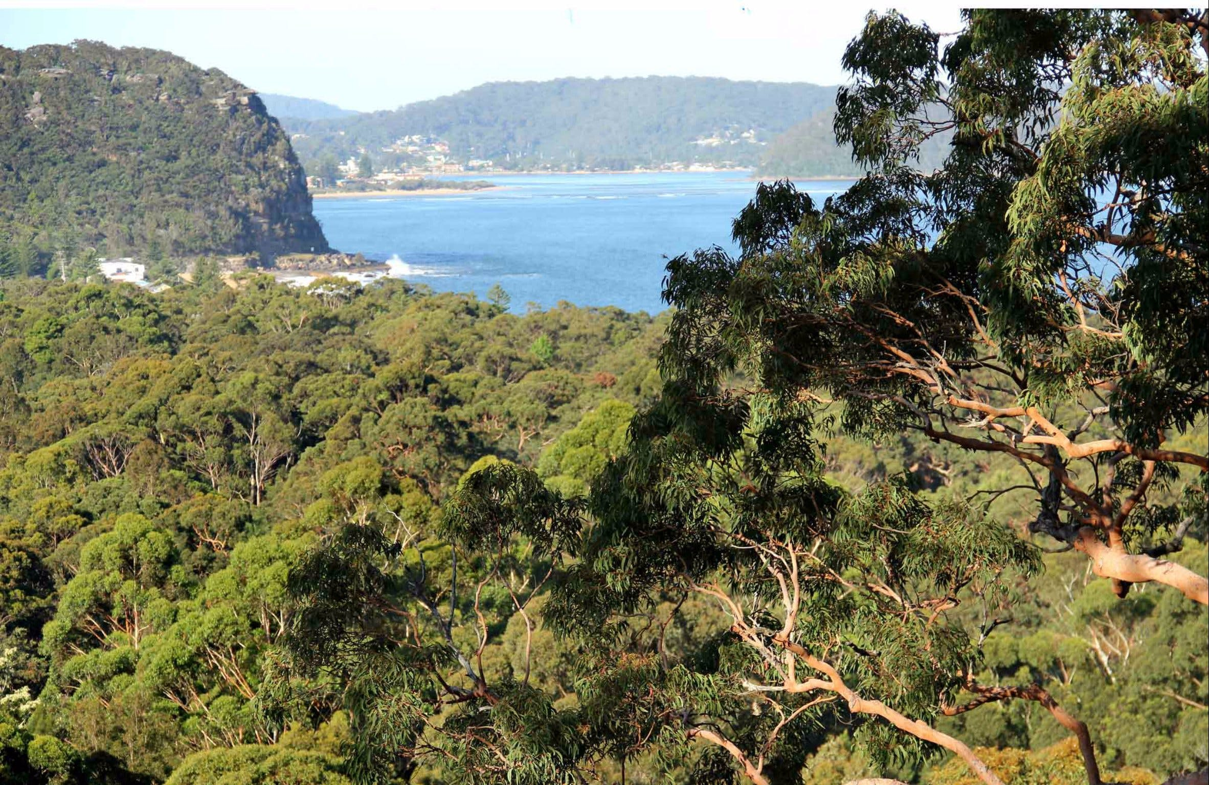 Patonga to Pearl Beach Walking Track - Accommodation Gold Coast