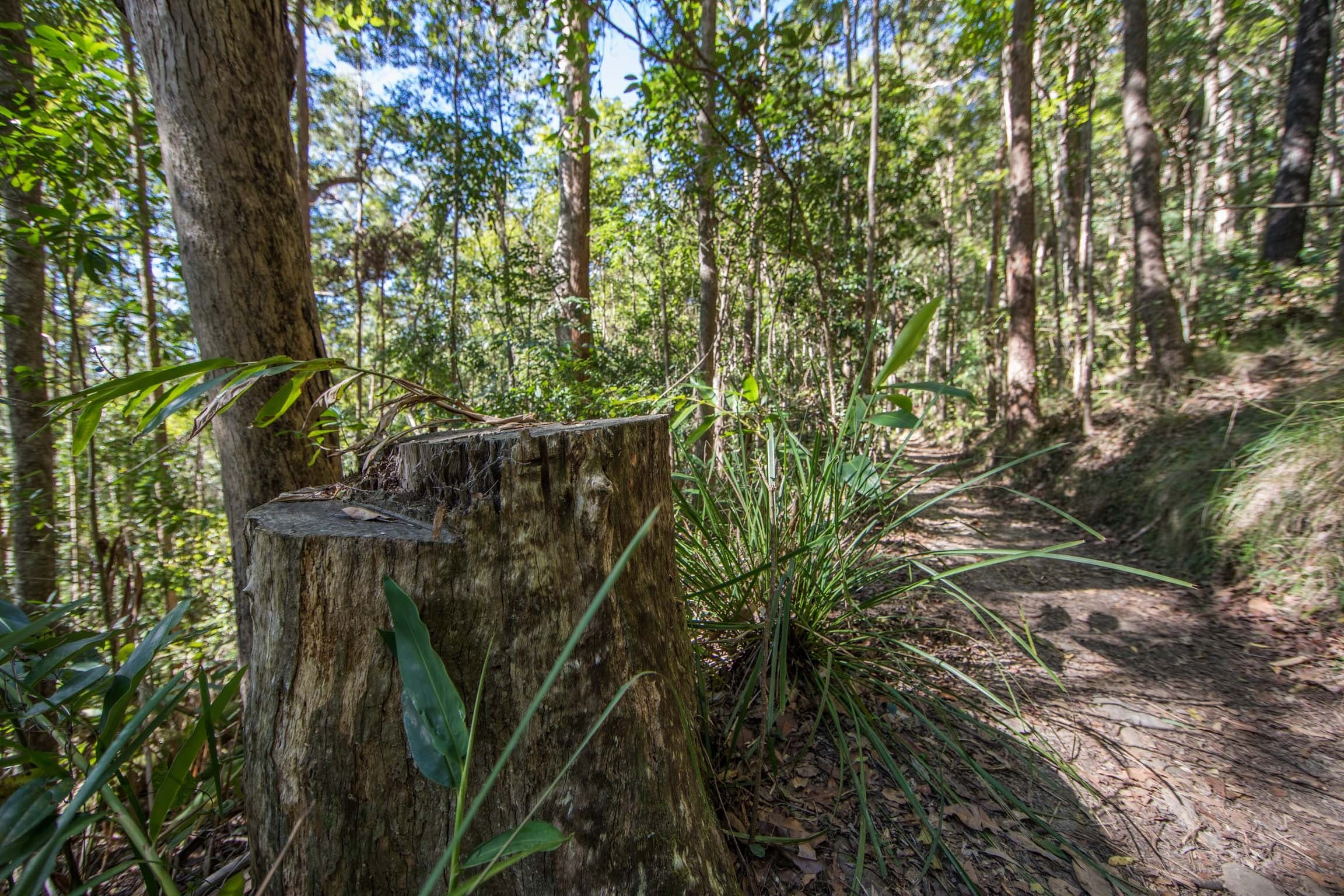 Thylogale Track - Accommodation Gold Coast
