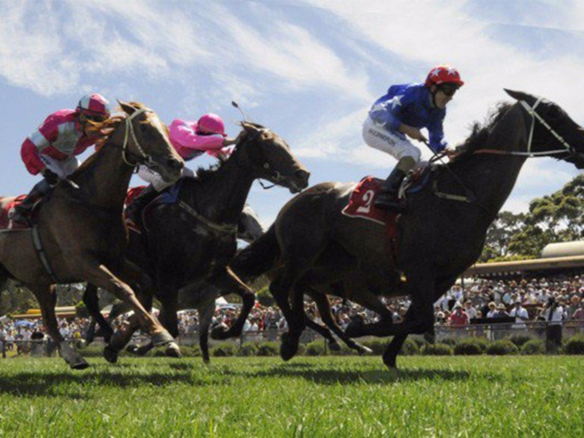 Moruya Racecourse - Accommodation Gold Coast