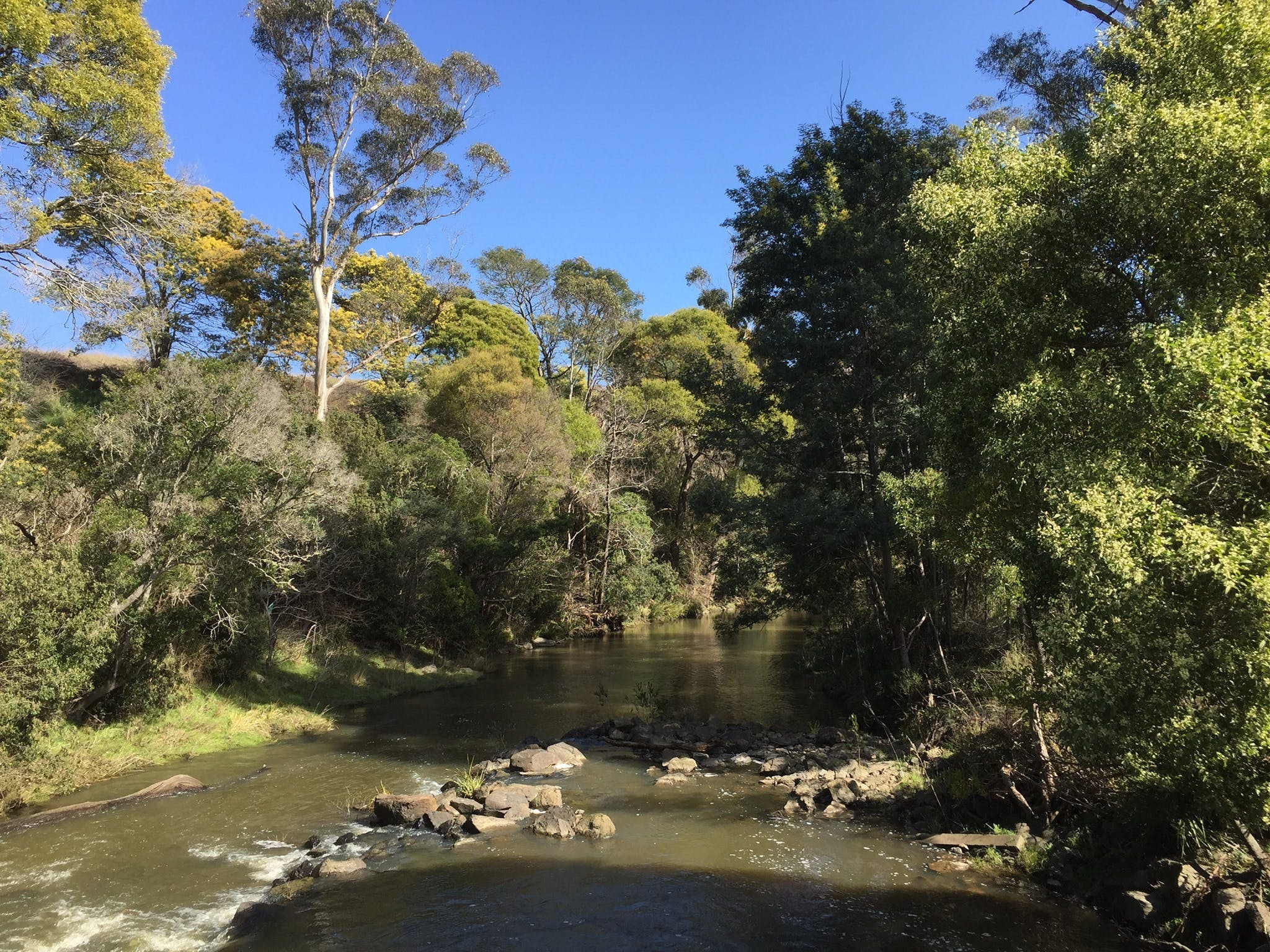 Pipers River Board Walk - Accommodation Gold Coast