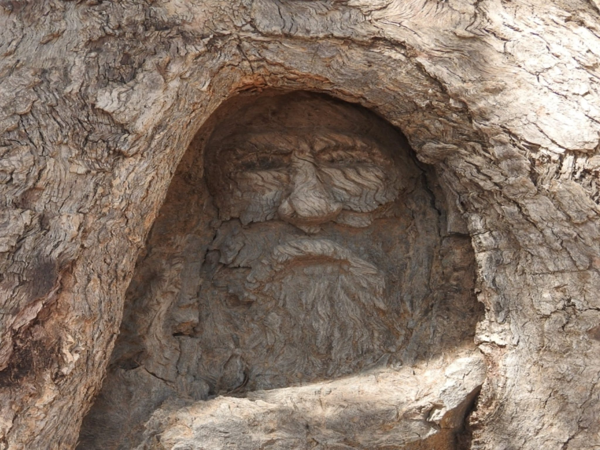 The Face Tree near Burke and Wills Dig Tree - Accommodation Gold Coast