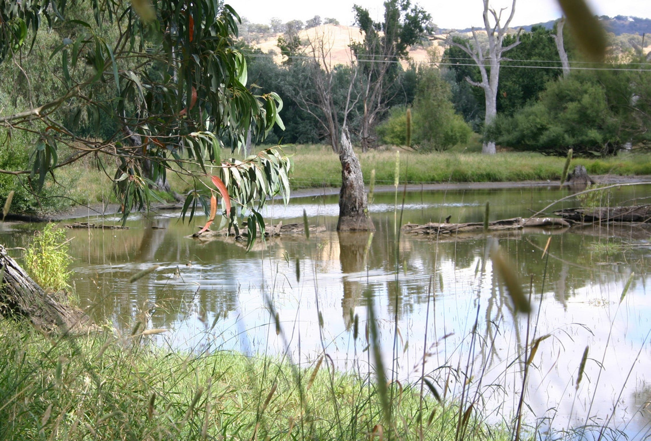Tumut Wetlands - Accommodation Gold Coast