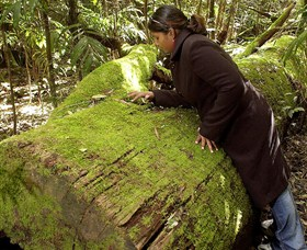 Washpool National Park - Washpool Walk - Accommodation Gold Coast