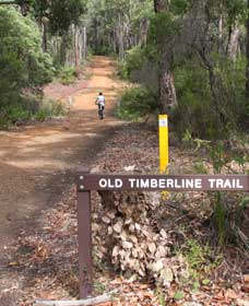 Old Timberline and Sidings Rail Trails - Accommodation Gold Coast