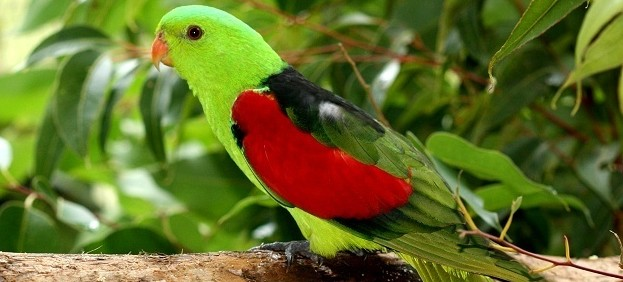 Birdworld Kuranda - Accommodation Gold Coast