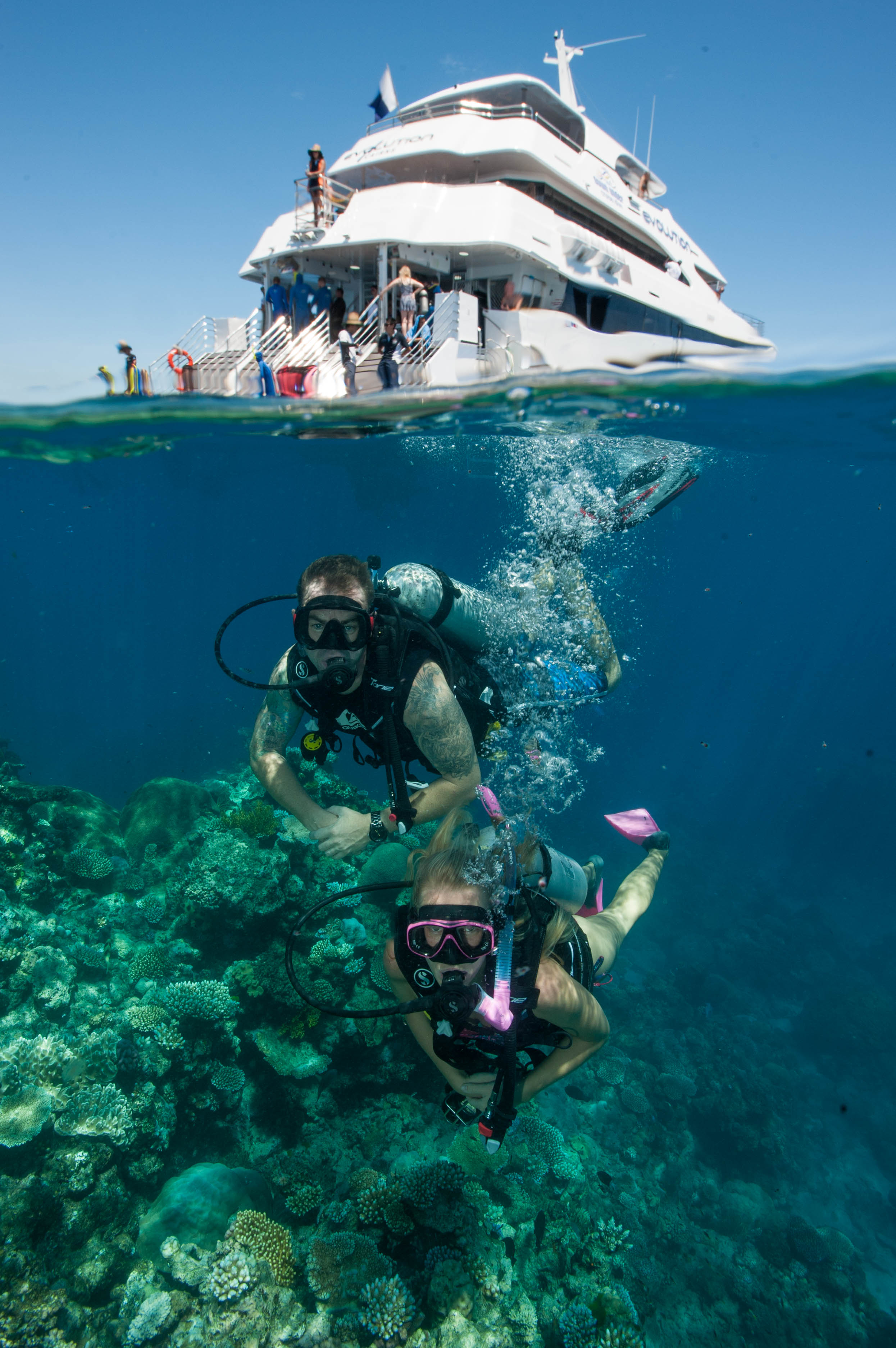 Down Under Cruise and Dive - Accommodation Gold Coast