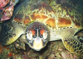 Adrenalin Snorkel and Dive - Accommodation Gold Coast